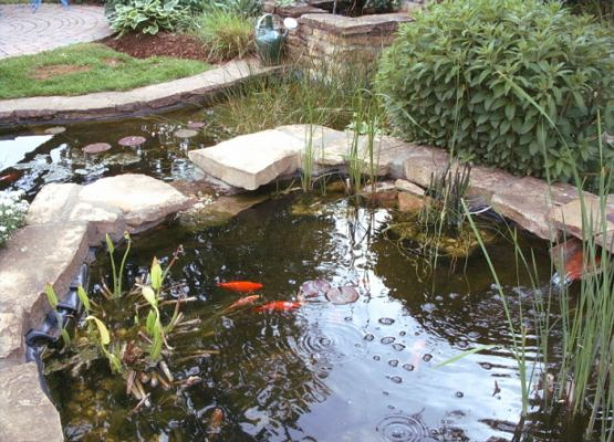 bassin d eau et jardins japonais page 2. Black Bedroom Furniture Sets. Home Design Ideas