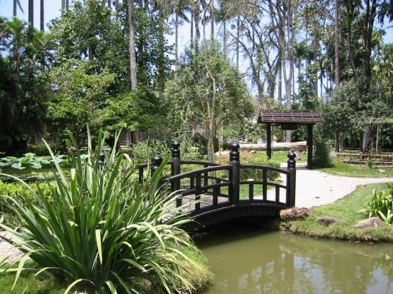 Bassin d eau et jardins japonais page 3 for Bassin jardin japonais