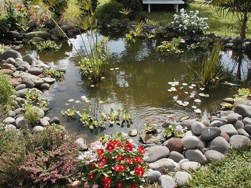 Bassin d 39 eau et jardins japonais for Bassin jardin japonais