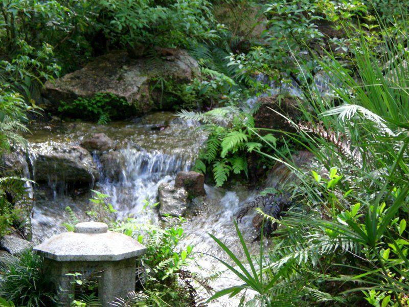 Bassin d eau et jardins japonais for Bassin jardin japonais