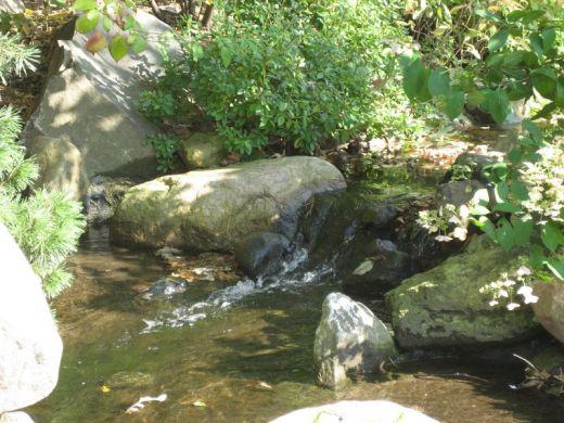 Bassin d 39 eau et jardins japonais - Bassin jardin japonais ...